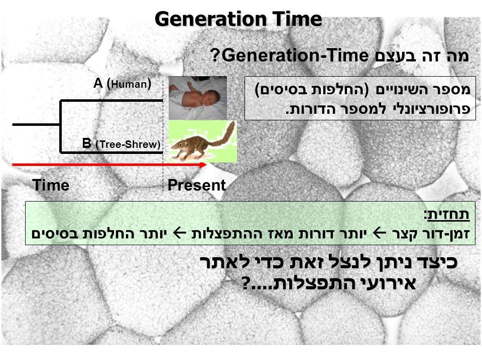 Generation Time מה זה בעצם Generation-Time? PresentTime A ( Human ) B (Tree-Shrew) מספר השינויים (החלפות בסיסים) פרופורציונלי למספר הדורות. תחזית: זמן
