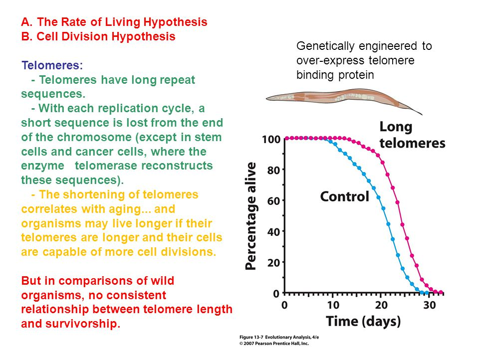 A.The Rate of Living Hypothesis B.
