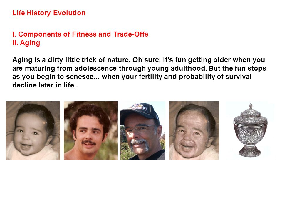 Life History Evolution I.Components of Fitness and Trade-Offs II.