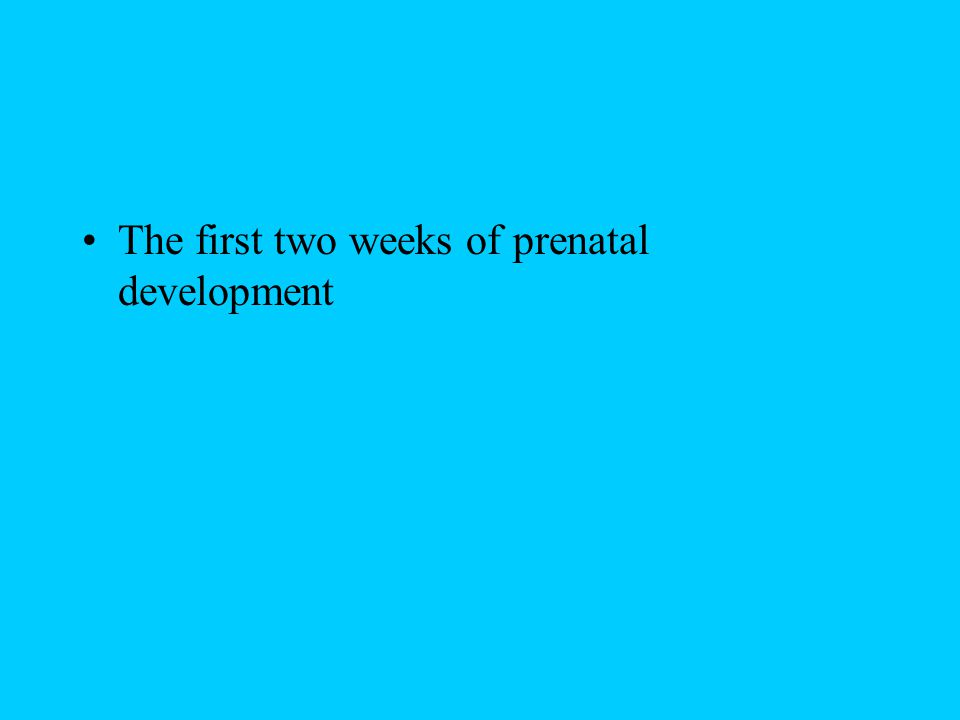 The first two weeks of prenatal development