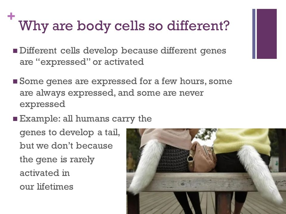 + Why are body cells so different.