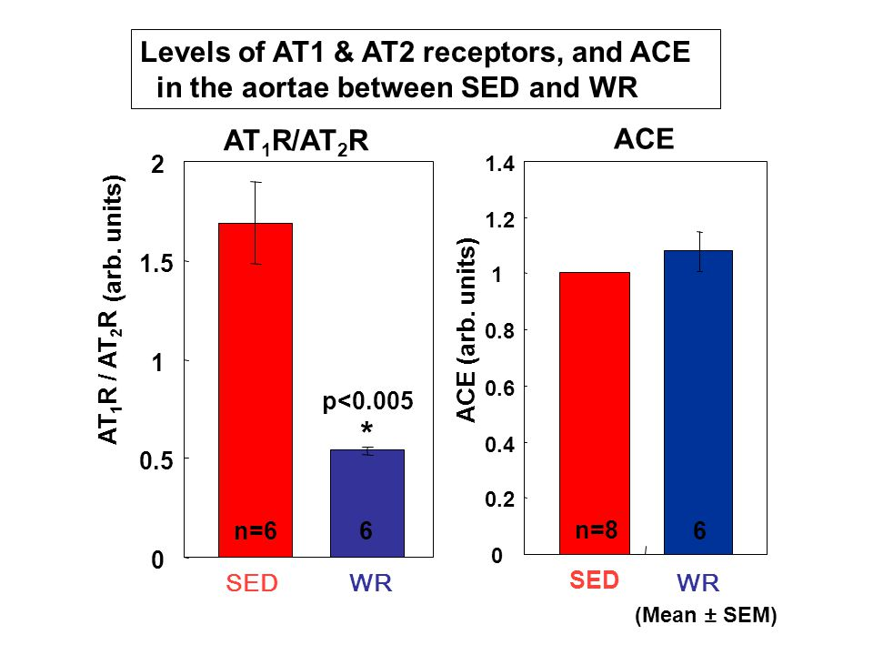 0 0.5 1 1.5 2 SEDWR AT 1 R / AT 2 R n=66 * p<0.005 (arb. units) (Mean ± SEM) Levels of AT1 & AT2 receptors, and ACE in the aortae between SED and WR 0