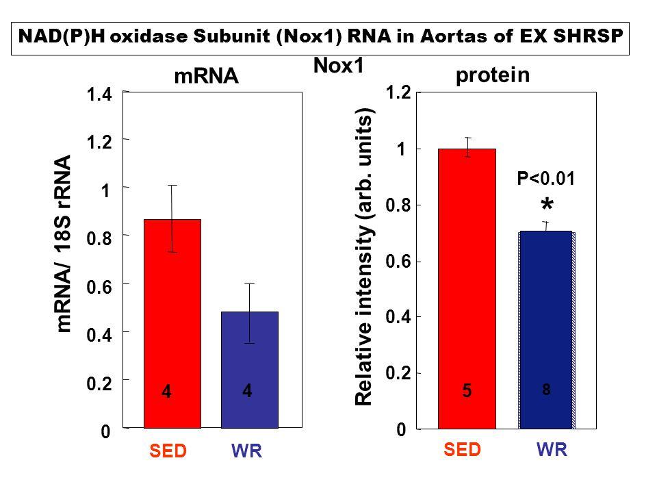 Nox1 Relative intensity (arb. units) 0 0.2 0.4 0.6 0.8 1 1.2 1.4 mRNA/ 18S rRNA SEDWR 4 4 mRNA protein 0 0.2 0.4 0.6 0.8 1 1.2 SEDWR 58 P<0.01 * NAD(P