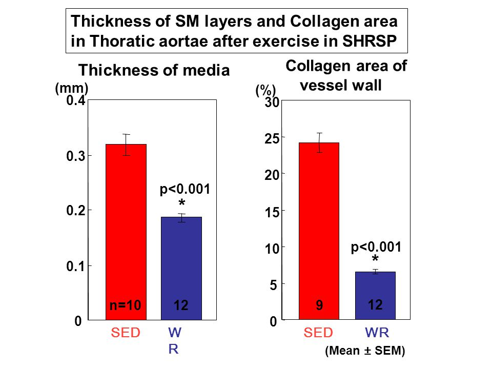 0 0.1 0.2 0.3 0.4 SEDWRWR 0 5 10 15 20 25 30 SEDWR (mm) (%) Thickness of media Collagen area of vessel wall * * p<0.001 n=10129 Thickness of SM layers and Collagen area in Thoratic aortae after exercise in SHRSP (Mean ± SEM)
