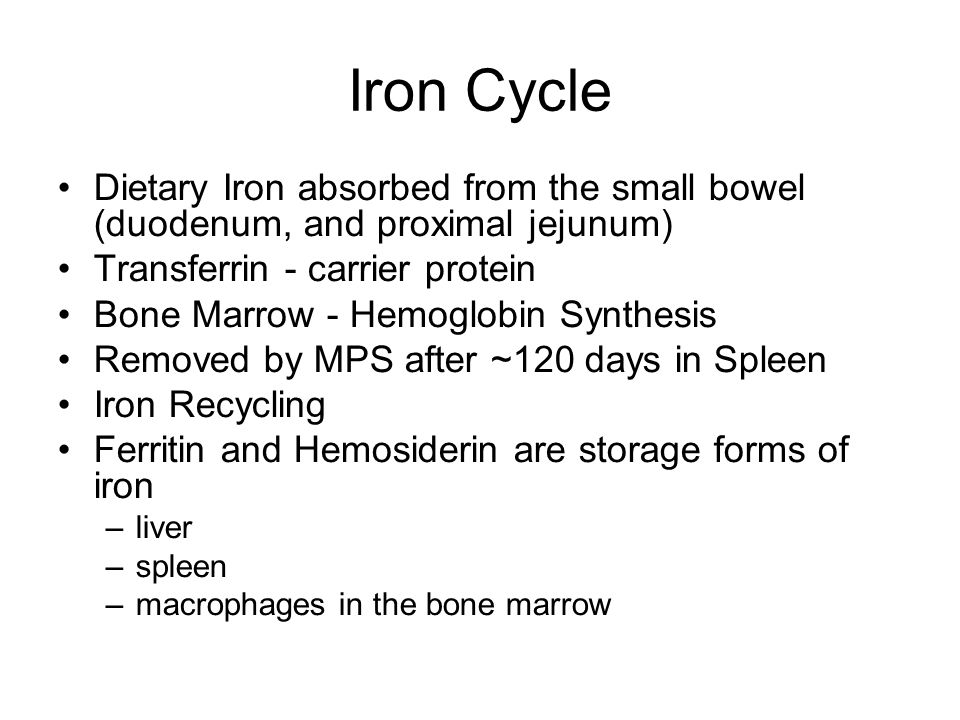 Iron Cycle Dietary Iron absorbed from the small bowel (duodenum, and proximal jejunum) Transferrin - carrier protein Bone Marrow - Hemoglobin Synthesis Removed by MPS after ~120 days in Spleen Iron Recycling Ferritin and Hemosiderin are storage forms of iron –liver –spleen –macrophages in the bone marrow