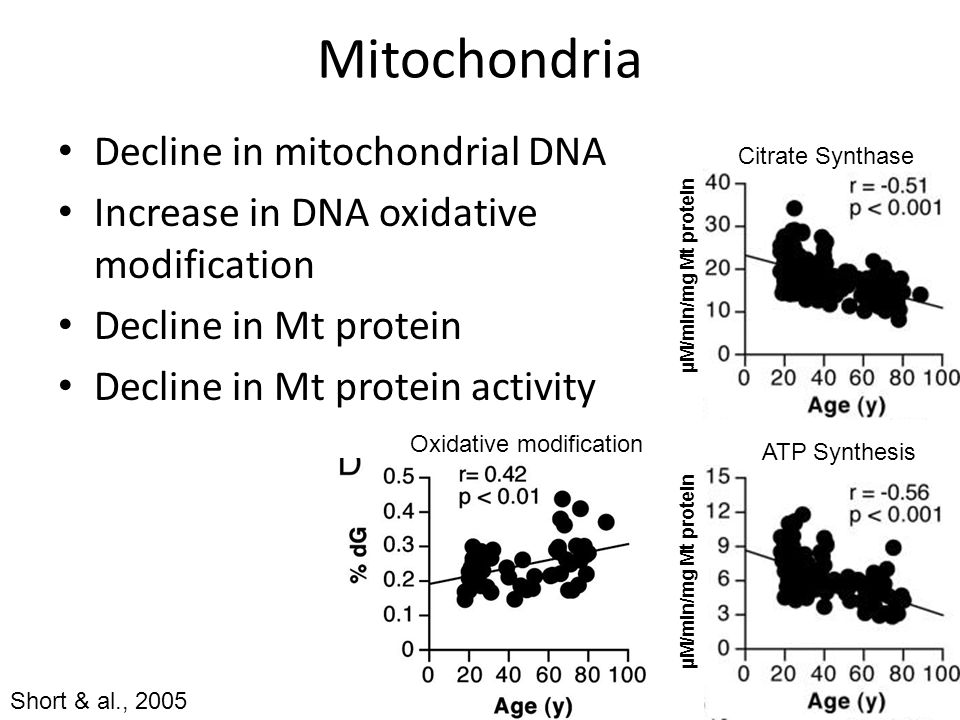 Mitochondria Decline in mitochondrial DNA Increase in DNA oxidative modification Decline in Mt protein Decline in Mt protein activity Citrate Synthase