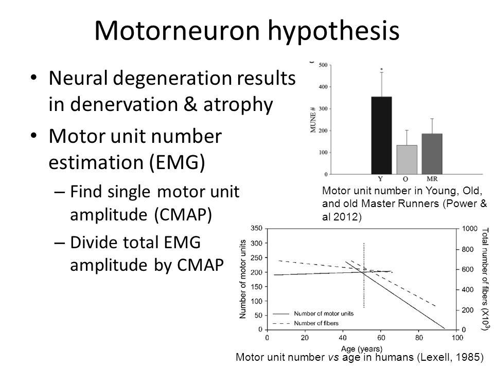 Motorneuron hypothesis Neural degeneration results in denervation & atrophy Motor unit number estimation (EMG) – Find single motor unit amplitude (CMA
