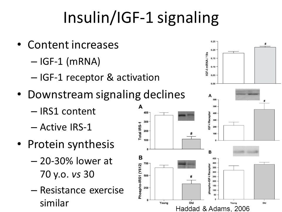 Insulin/IGF-1 signaling Content increases – IGF-1 (mRNA) – IGF-1 receptor & activation Downstream signaling declines – IRS1 content – Active IRS-1 Pro