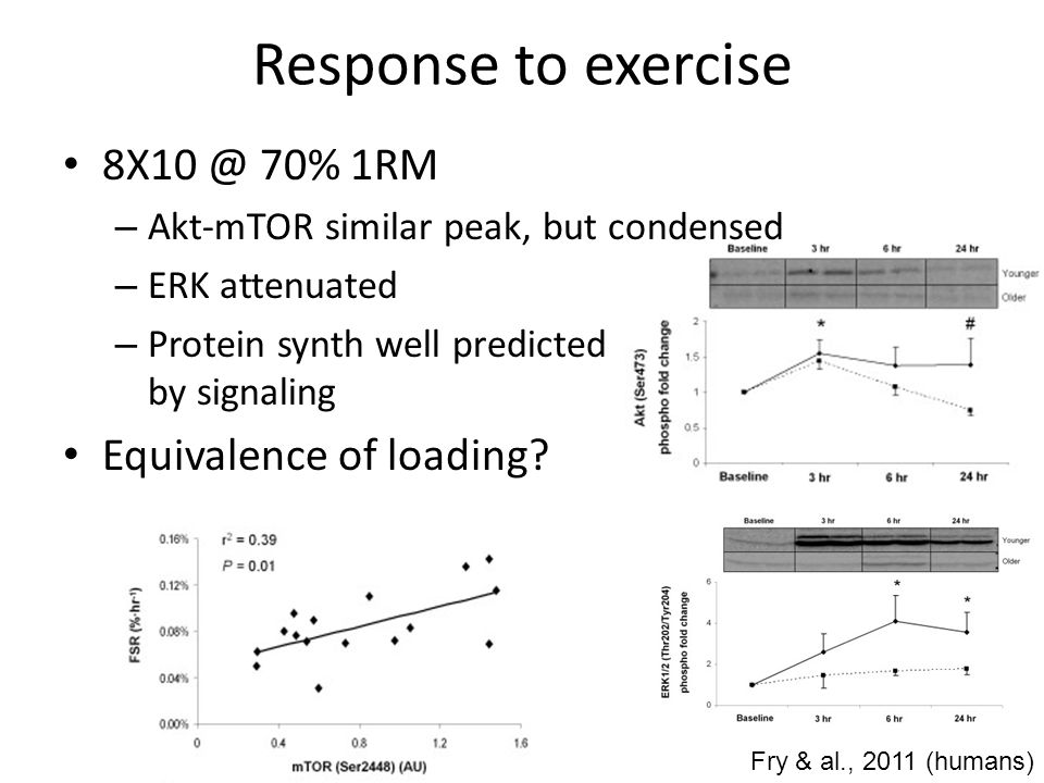 Response to overload Synergist ablation – Attenuated signaling – Low, but consistent hypertrophy Aged animals also much less AMP stress SA may be 'weak' stimulus Young Old mTOR p70S6k 4EBP-1 Thomson & Gordon, 2006 (rats)