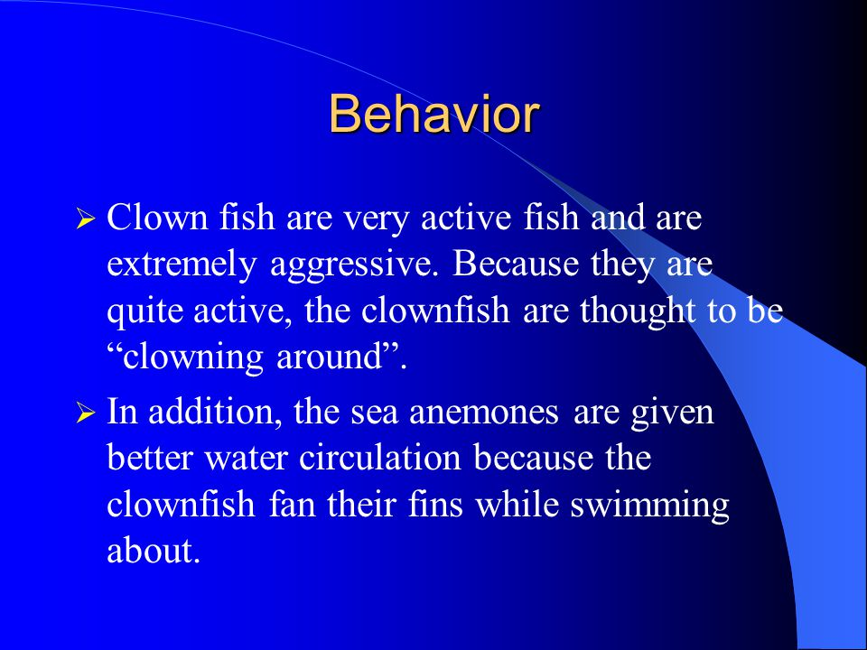 Behavior  Clown fish are very active fish and are extremely aggressive.