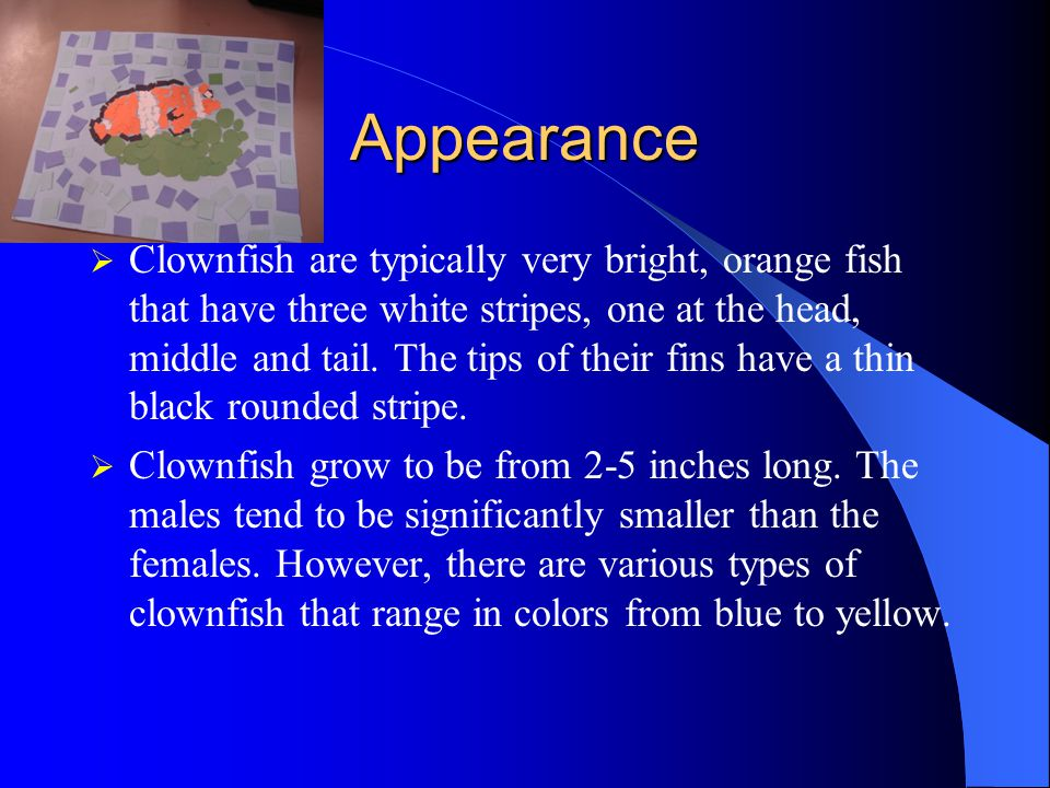 Appearance  Clownfish are typically very bright, orange fish that have three white stripes, one at the head, middle and tail.
