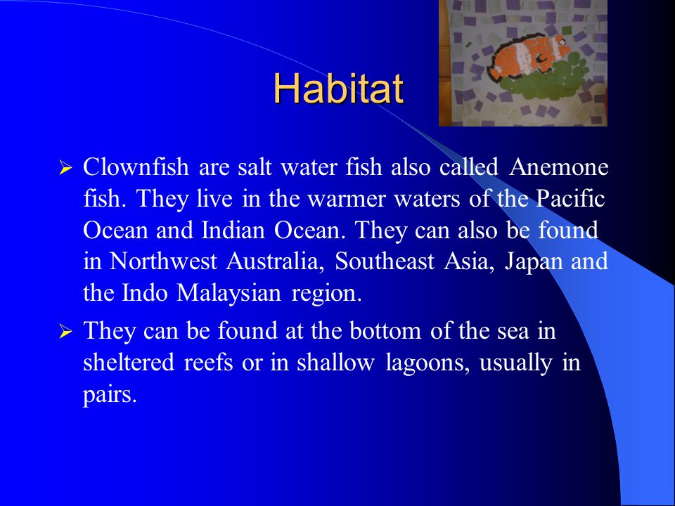 Habitat  Clownfish are salt water fish also called Anemone fish.