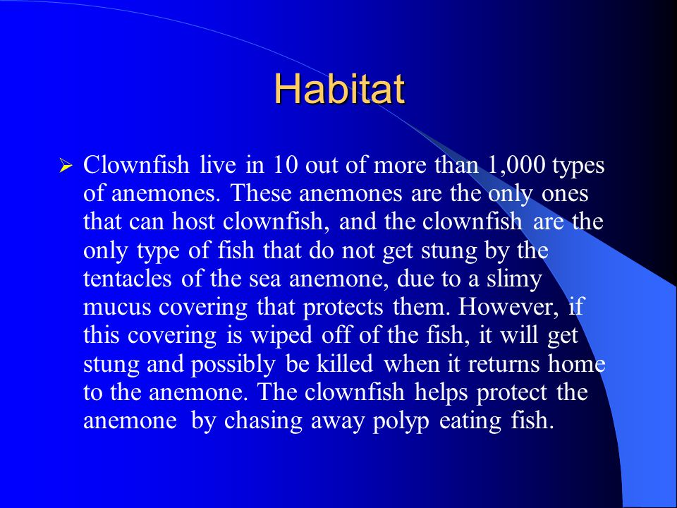 Habitat  Clownfish live in 10 out of more than 1,000 types of anemones.