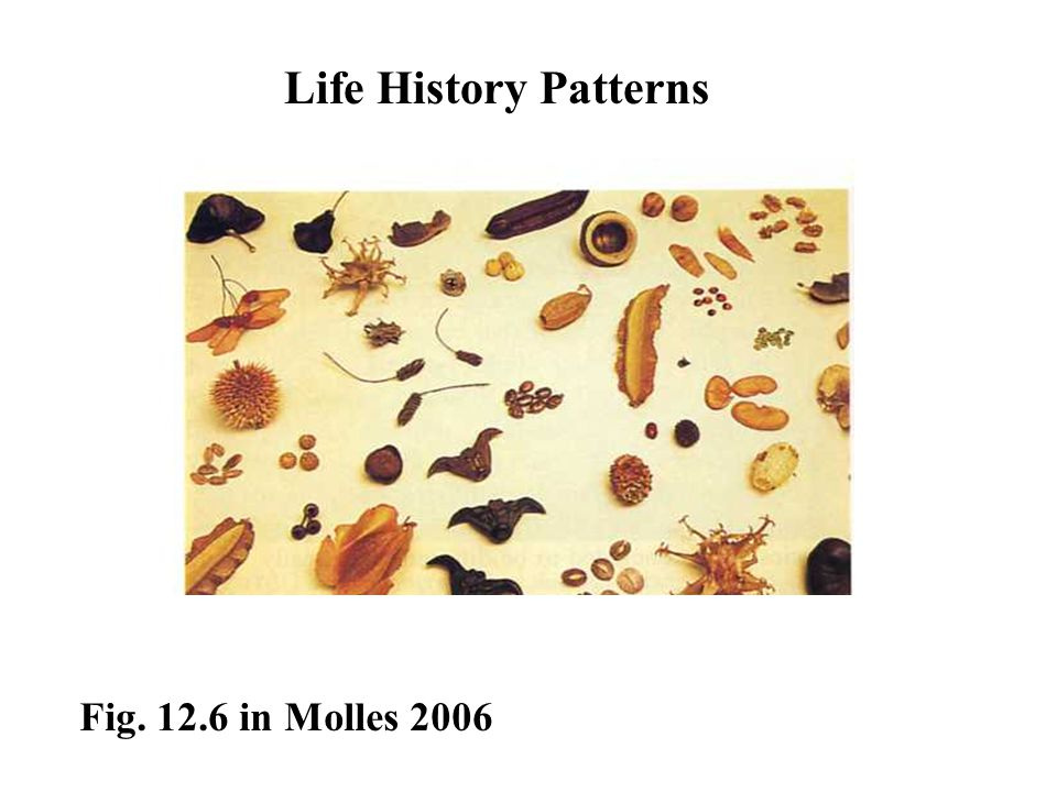 Life History Patterns Fig. 12.6 in Molles 2006
