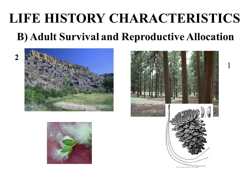 B) Adult Survival and Reproductive Allocation LIFE HISTORY CHARACTERISTICS 1 2