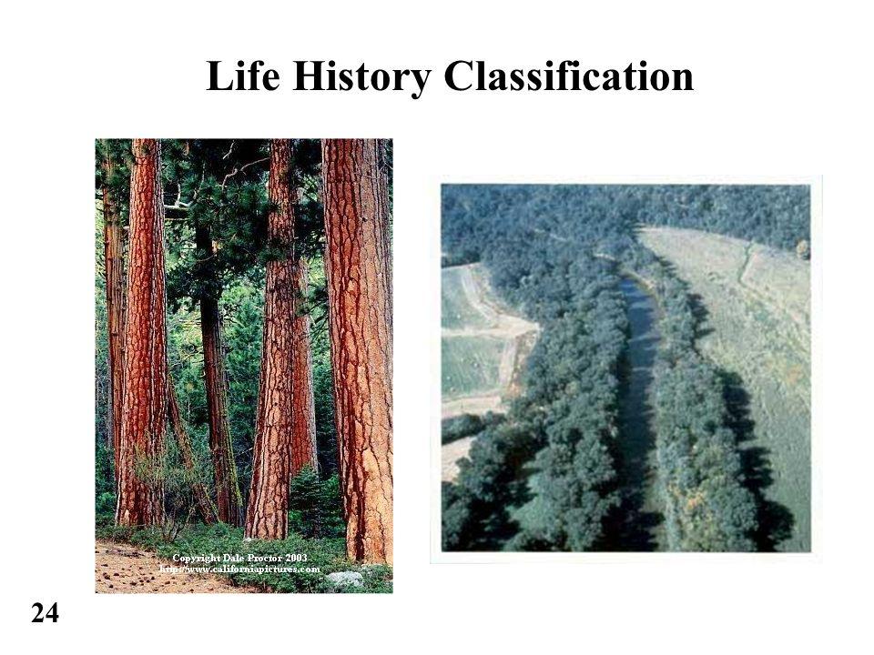 24 Life History Classification