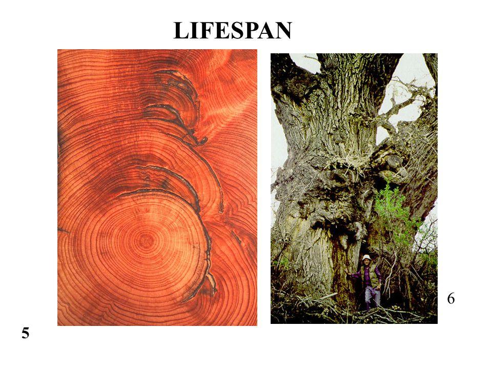 5 6 LIFESPAN