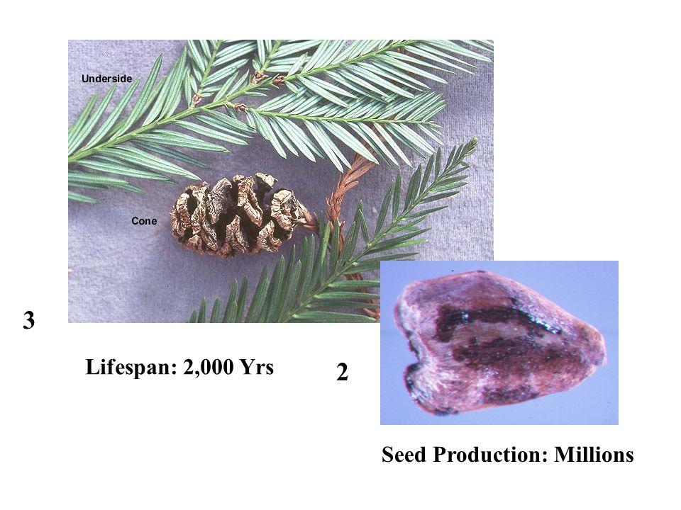 3 2 Lifespan: 2,000 Yrs Seed Production: Millions
