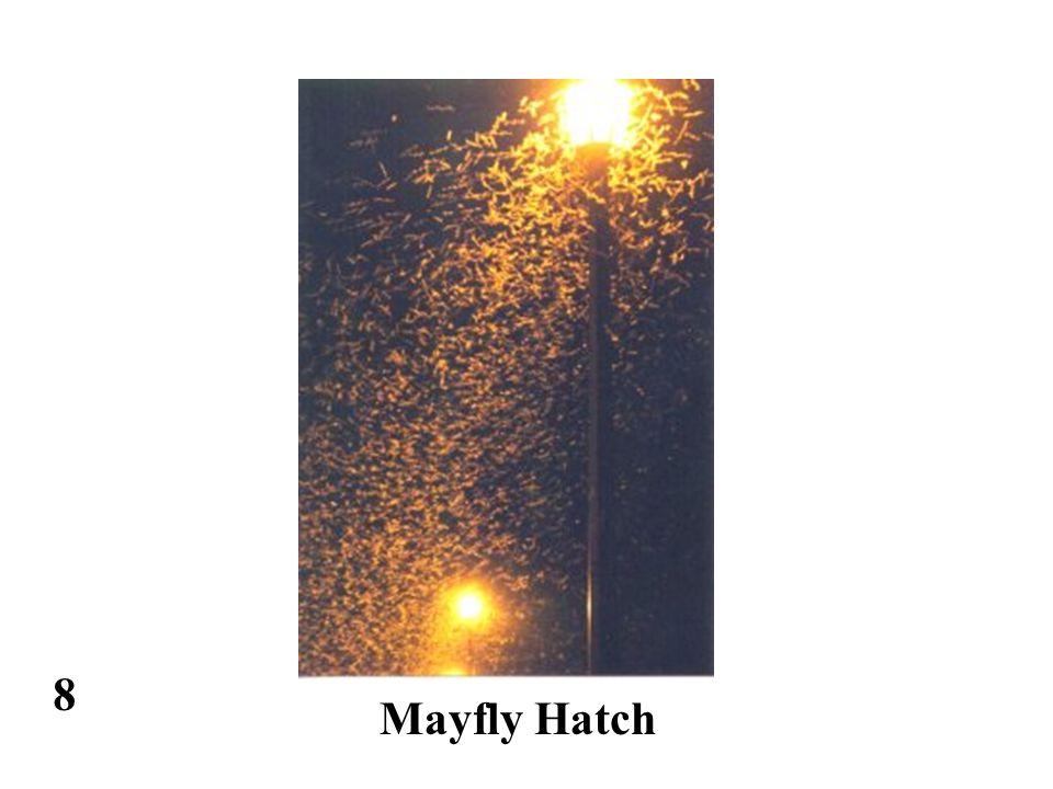 8 Mayfly Hatch