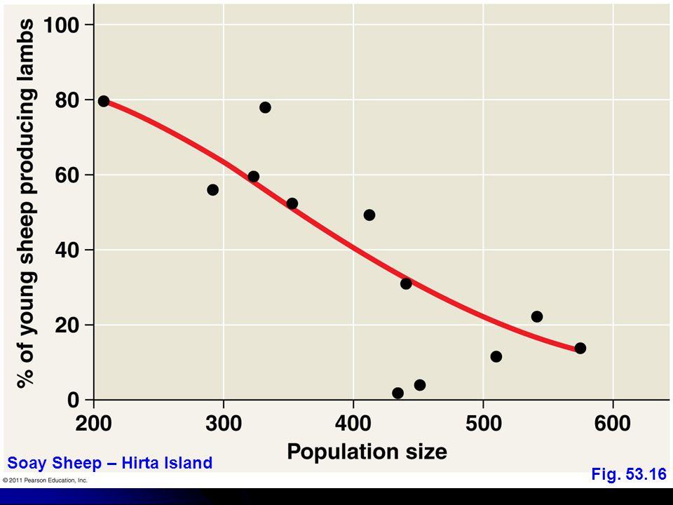Soay Sheep – Hirta Island Fig. 53.16
