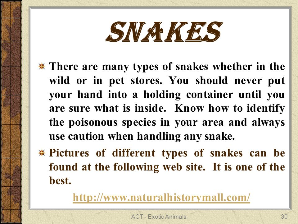 ACT - Exotic Animals30 Snakes There are many types of snakes whether in the wild or in pet stores.