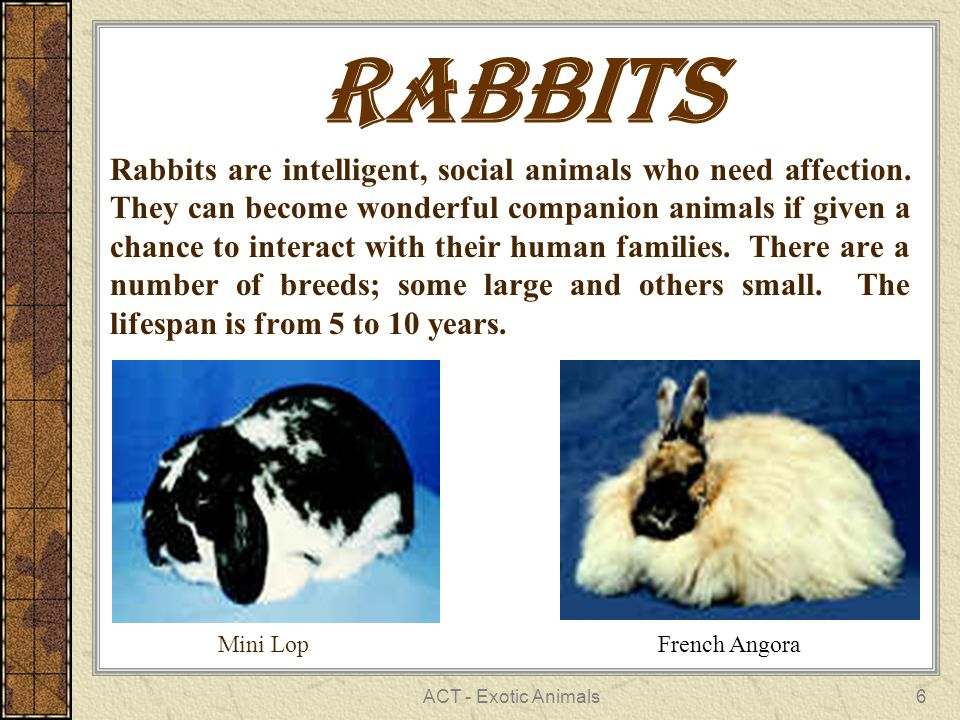 ACT - Exotic Animals6 Rabbits Rabbits are intelligent, social animals who need affection.