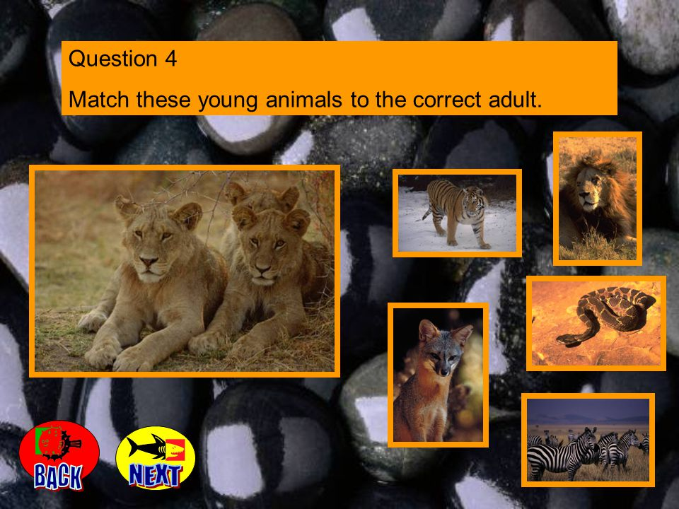 Question 4 Match these young animals to the correct adult.