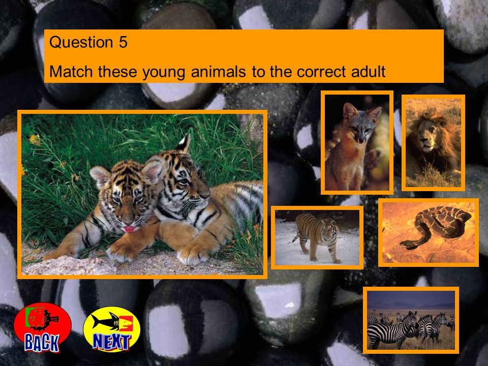 Question 5 Match these young animals to the correct adult