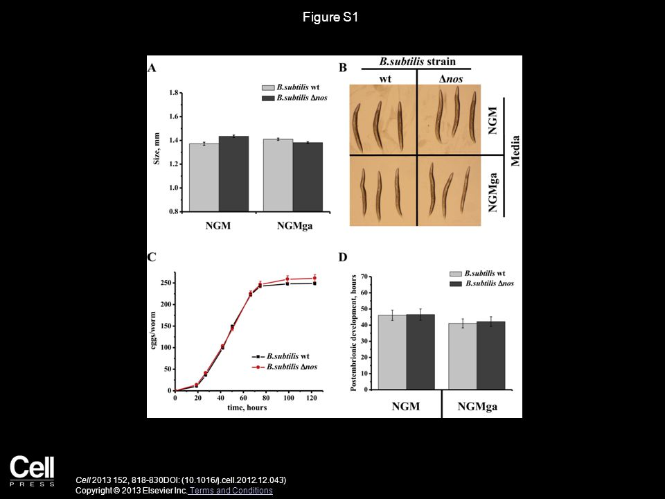 Figure S2 Cell 2013 152, 818-830DOI: (10.1016/j.cell.2012.12.043) Copyright © 2013 Elsevier Inc.