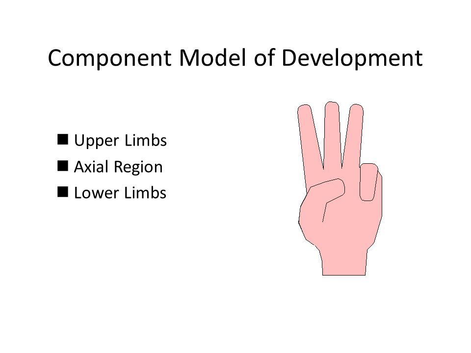 Component Model of Development nUpper Limbs nAxial Region nLower Limbs