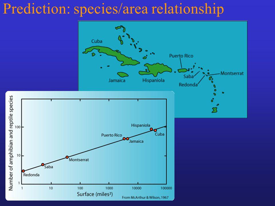 Prediction: species/area relationship