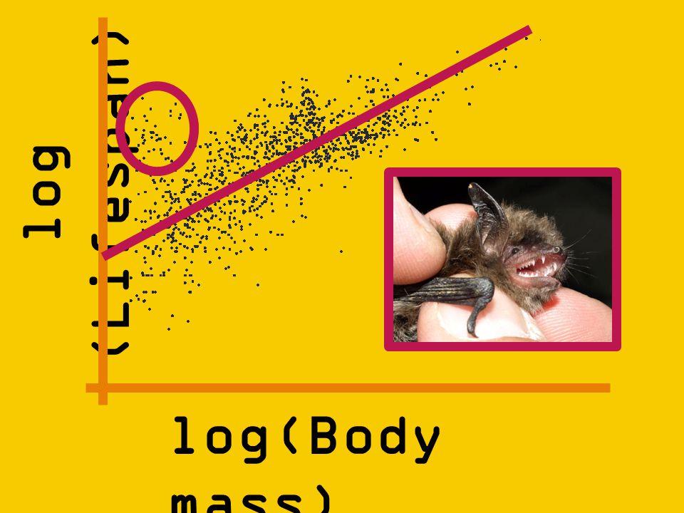 log (Lifespan) log(Body mass)