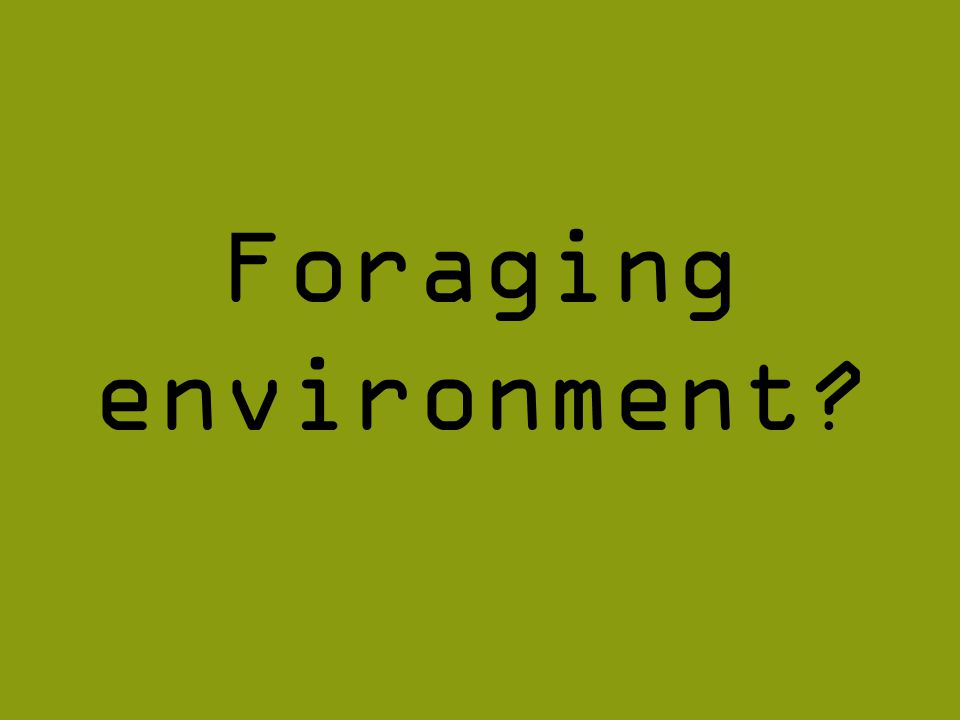 Foraging environment