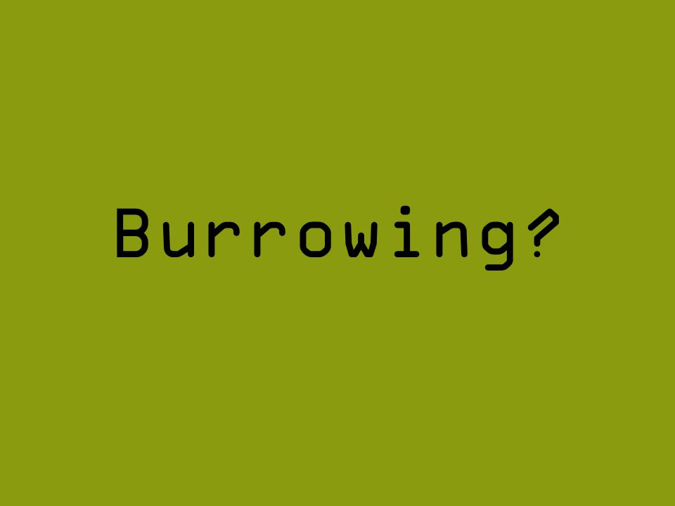 Burrowing?