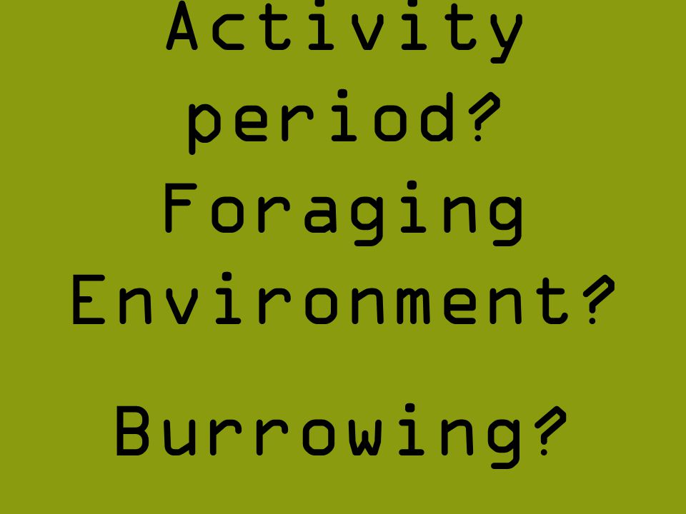 Foraging Environment Activity period Burrowing