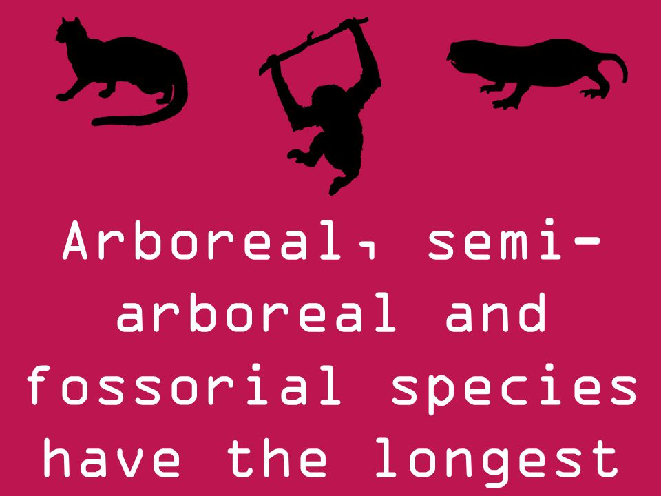 Arboreal, semi- arboreal and fossorial species have the longest lifespans