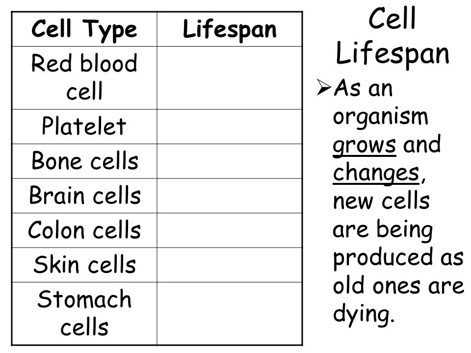 Cell Lifespan  As an organism grows and changes, new cells are being produced as old ones are dying. Cell TypeLifespan Red blood cell Platelet Bone c