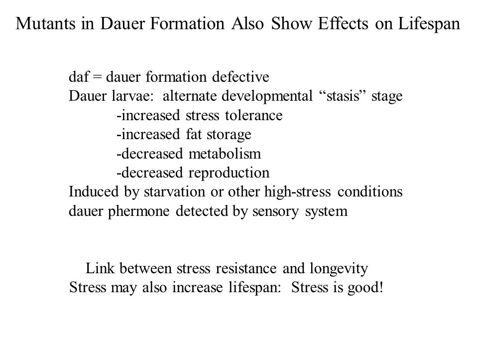 daf = dauer formation defective Dauer larvae: alternate developmental stasis stage -increased stress tolerance -increased fat storage -decreased metabolism -decreased reproduction Induced by starvation or other high-stress conditions dauer phermone detected by sensory system Mutants in Dauer Formation Also Show Effects on Lifespan Link between stress resistance and longevity Stress may also increase lifespan: Stress is good!