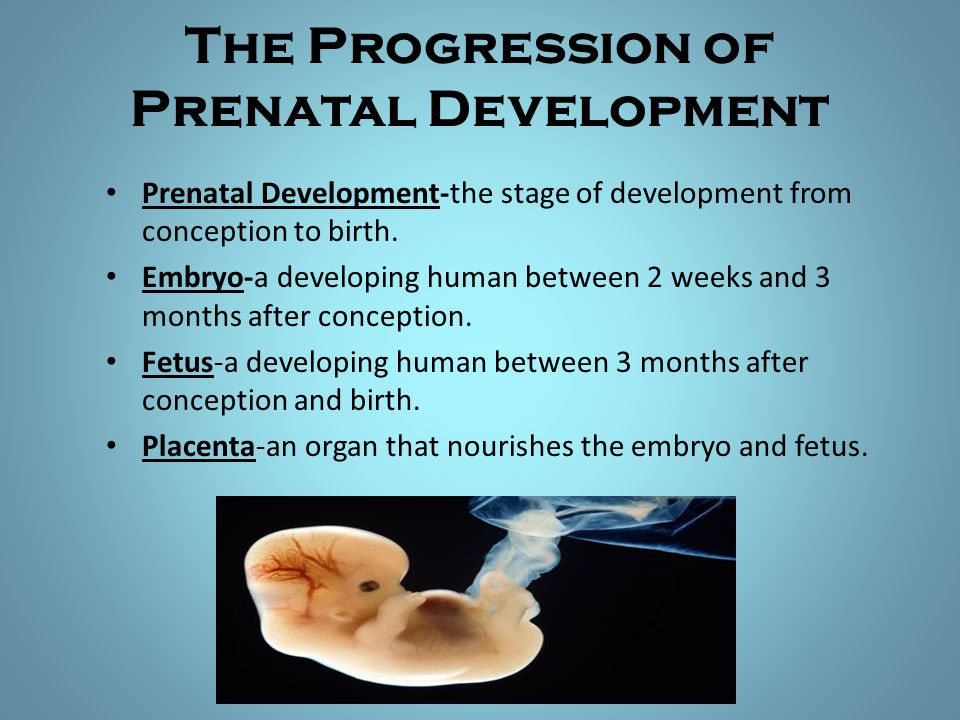 The Progression of Prenatal Development Prenatal Development-the stage of development from conception to birth. Embryo-a developing human between 2 we
