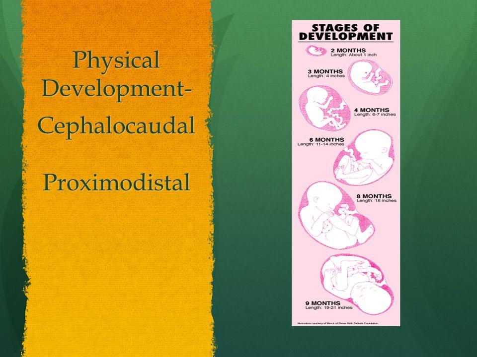 Physical Development- CephalocaudalProximodistal
