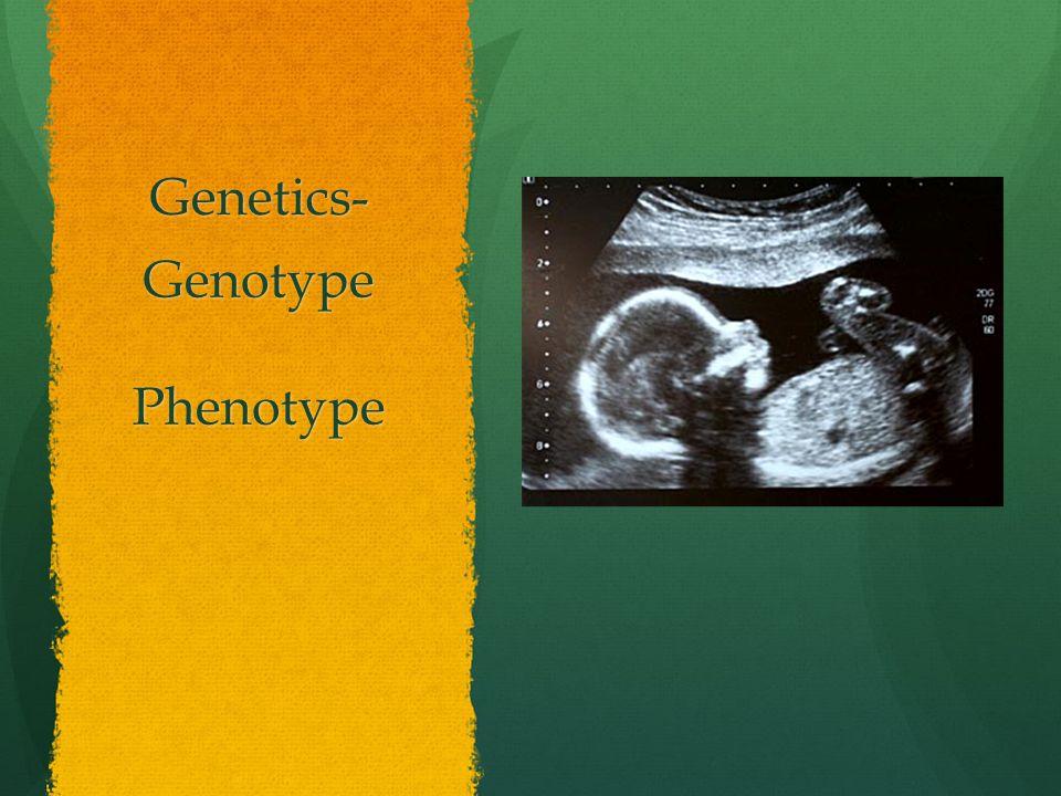 Genetics- GenotypePhenotype