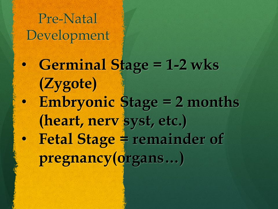 Pre-Natal Development Germinal Stage = 1-2 wks (Zygote) Germinal Stage = 1-2 wks (Zygote) Embryonic Stage = 2 months (heart, nerv syst, etc.) Embryonic Stage = 2 months (heart, nerv syst, etc.) Fetal Stage = remainder of pregnancy(organs…) Fetal Stage = remainder of pregnancy(organs…)