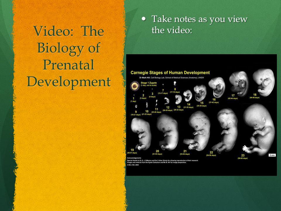 Video: The Biology of Prenatal Development Take notes as you view the video: Take notes as you view the video: