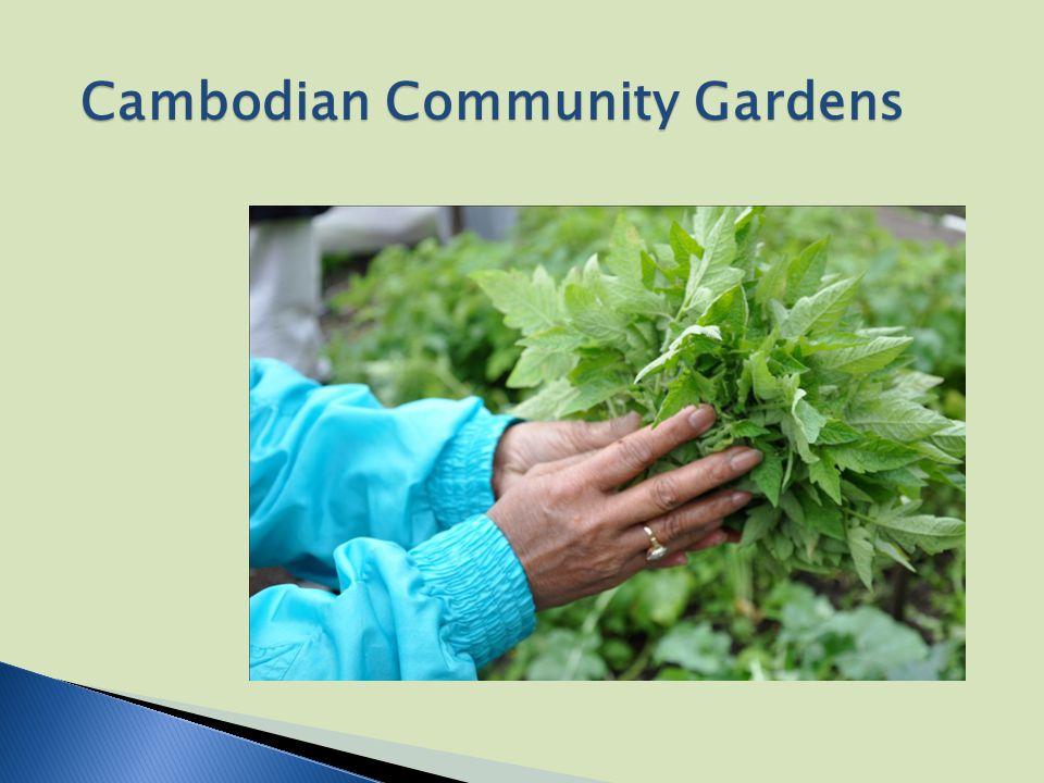 Cambodian Community Gardens
