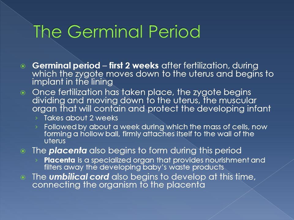  Germinal period – first 2 weeks after fertilization, during which the zygote moves down to the uterus and begins to implant in the lining  Once fer
