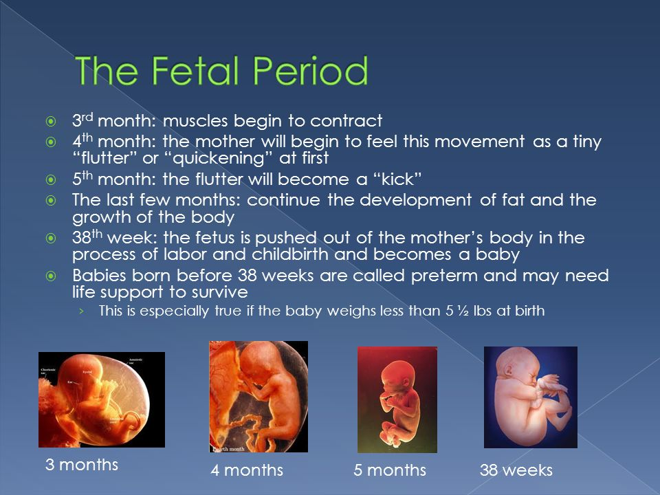 """ 3 rd month: muscles begin to contract  4 th month: the mother will begin to feel this movement as a tiny """"flutter"""" or """"quickening"""" at first  5 th"""