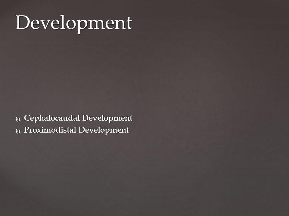  Cephalocaudal Development  Proximodistal Development Development