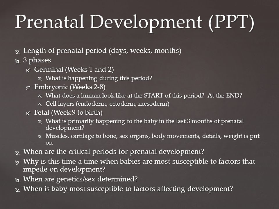  Length of prenatal period (days, weeks, months)  3 phases  Germinal (Weeks 1 and 2)  What is happening during this period.