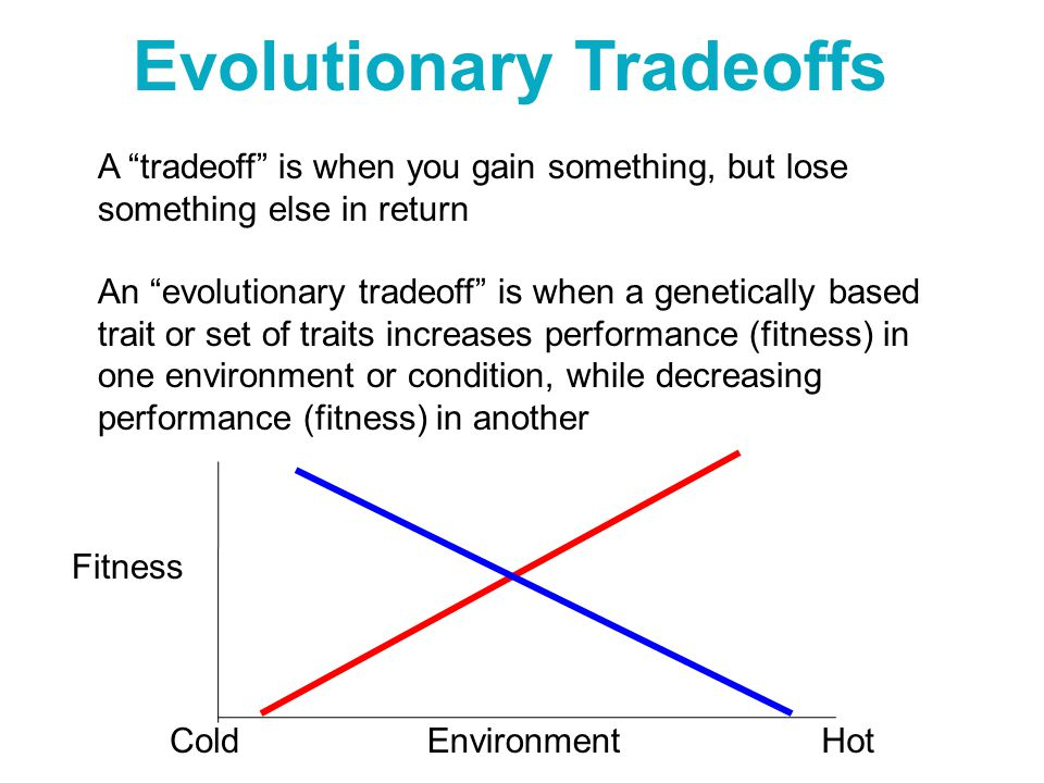 "Evolutionary Tradeoffs Environment Fitness ColdHot A ""tradeoff"" is when you gain something, but lose something else in return An ""evolutionary tradeof"