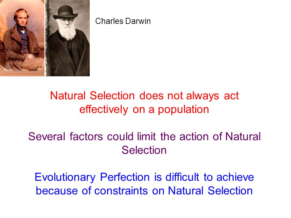 Natural Selection does not always act effectively on a population Several factors could limit the action of Natural Selection Evolutionary Perfection